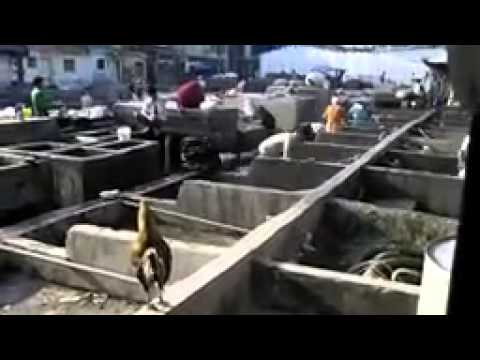 Mumbai, Red Light District And Laundry Slum By Fadil Mohamud Ibrahim video