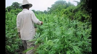 Mexico is trying to Decriminlize ALL Drugs - CannaPost Daily Ep 2
