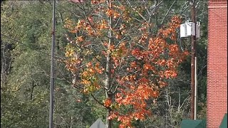 Warmer temperatures and lack of rain puts environmental stress on western Massachusetts