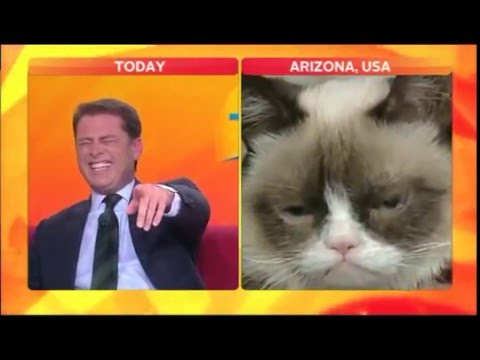 Anchor Can't Stop Laughing @ Funny Cat Face - Look At That Cat #Blooper