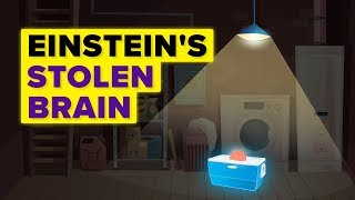 A Man Steals Albert Einstein's Brain And Keeps It In His Basement For 23 Years