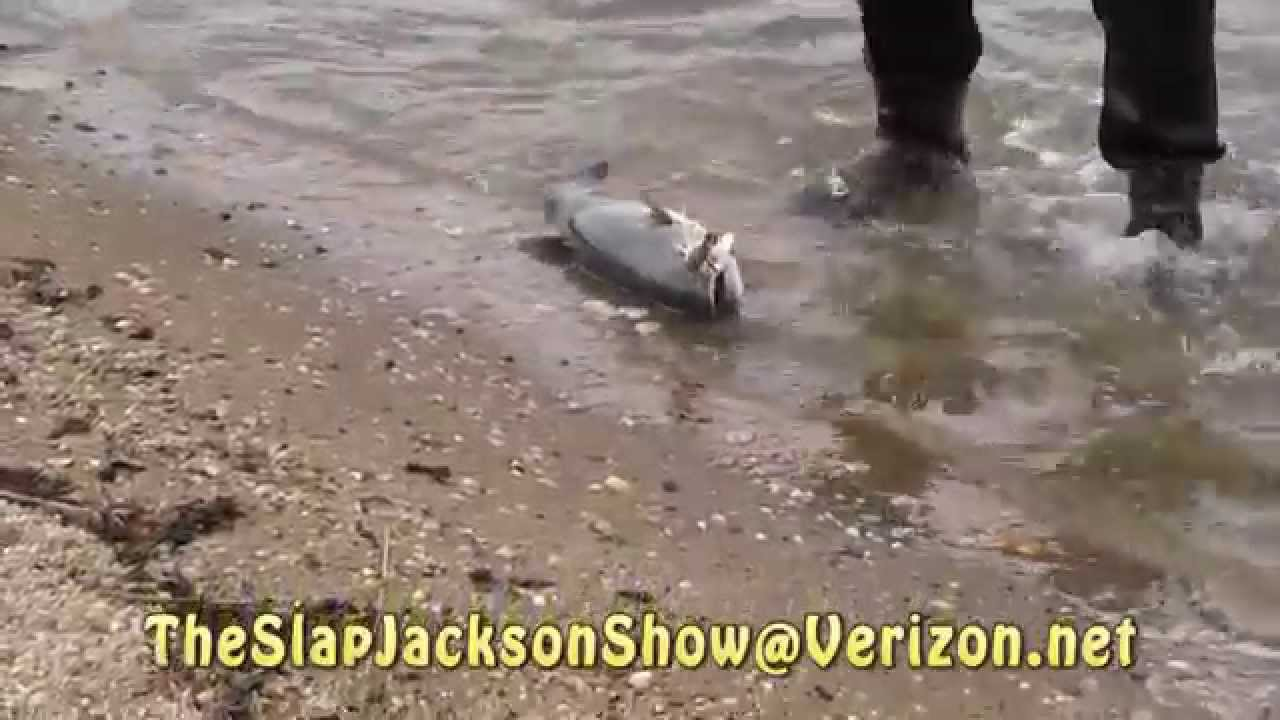 Surf fishing with slap jackson october 23 2014 youtube for Long island surf fishing report