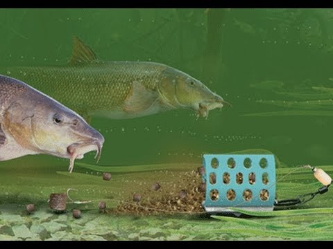 Pesca de barbos e carpas com feeder rio mondego youtube for Carpa de rio