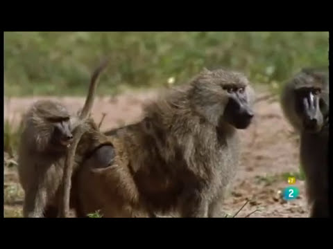 Documental Los cazadores de monos