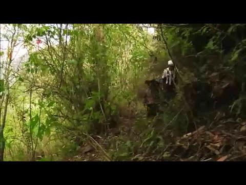Reportaje sobre el Programa Ecosistemas Forestales Andinos en TVPerú (part 1)