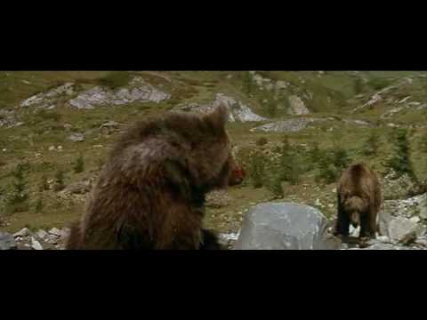 L'Ours (1988) - the cougar scene Video