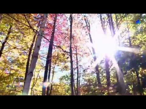 ✿ ♡ ✿ Beautiful Morning by Josef MILLER  in memory of Lisa-Maree O'HARA (31.01.1988 – 05.01.2013)