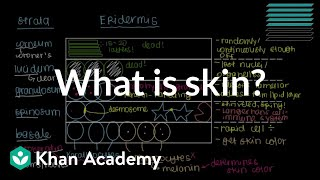 What is skin? (Epidermis) | Integumentary system physiology | NCLEX-RN | Khan Academy