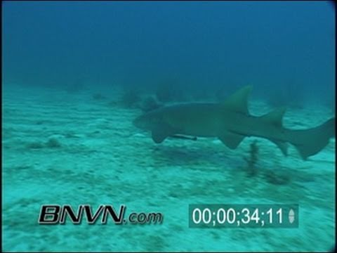 8/3/2001 Dry Tortugas, FL - Following Nurse Shark Video