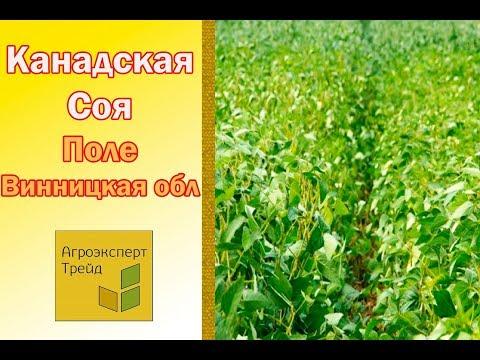 Выращивание соя как бизнес