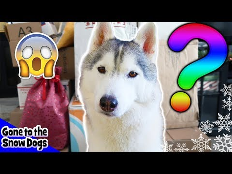 Husky Mystery Box Unboxing | Christmas Mystery Boxes from Fans