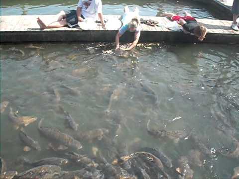 Smith mountain lake fish youtube for Smith mountain lake striper fishing