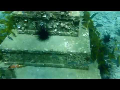 Dive Grenada Artificial Reef and Marine Conservation   October 2014