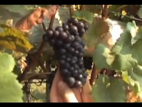 How Grapes Help Your Health - Red Wine Antioxidants - Men's Health