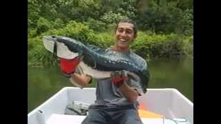 Pescando un gigante Pez Cabeza de Serpiente (de río)