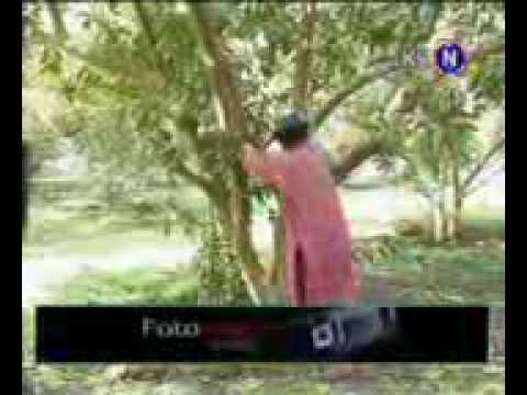 Bachayo Sindhi Funny Best Video .mp4 video