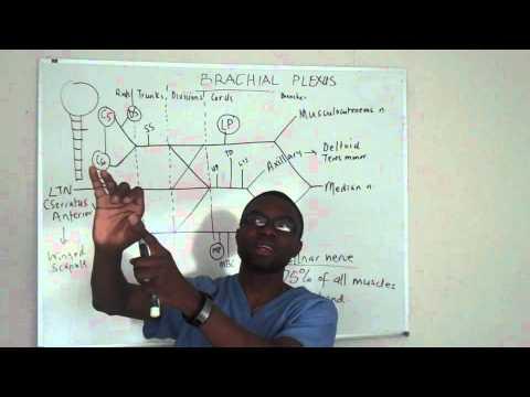 Brachial plexus made ridiculosuly simple lecture part 5