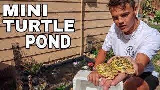 BUYING ALBINO TURTLES for My BACKYARD POND!!