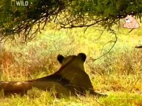 Первозданная природа. Этоша. Дикая Пустыня Африки.