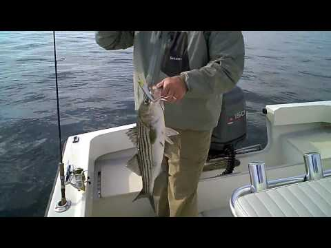Shore Catch Guide Service - Barnegat Bay