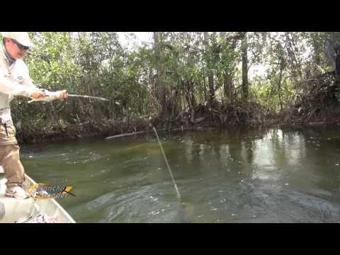 Pescaria De Trairão Amazônico, Peixe Extremamente Esportivo - Bloco 2