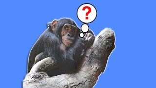 EVOLUTION - Why Are There Still Monkeys? - Head Squeeze