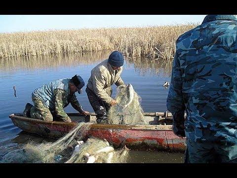 Браконьеры бросились сети ,  (рыбалка) на спиннинг.