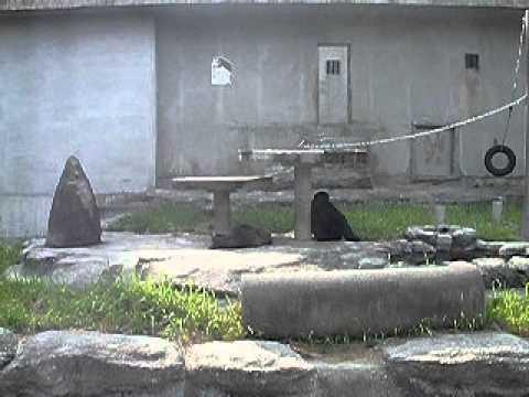 のんびりなチンパンジー 動物園
