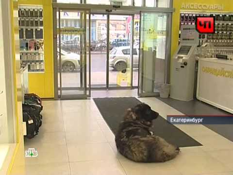 НТВ. ЧП - 18.09.12 Нападение собаки