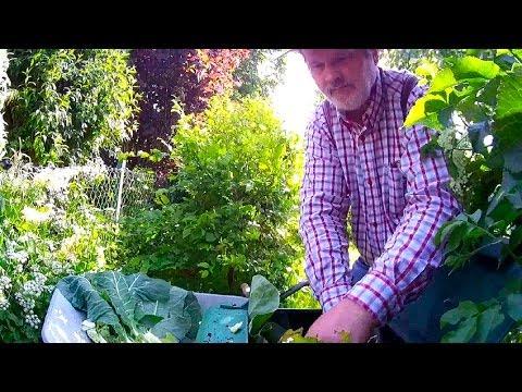 Erntezeit Im Hochbeet Erdbeeren+Blumenkohl (Gewächshaus & Hochbeet Perfekt! Film 10)