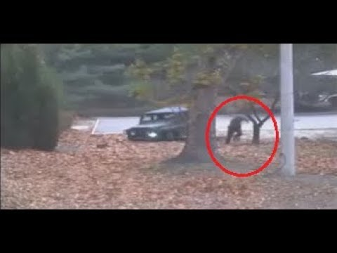 N.Korean defector making run for freedom shot by comrades (CCTV)