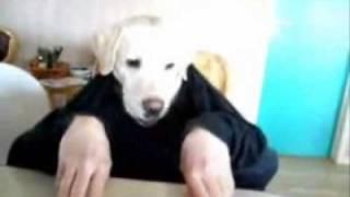 Perro-comiendo-elRellano