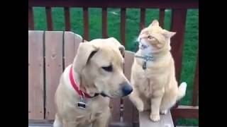 Cat Punching Dog