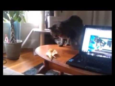 Кот и Банановая Кожура! Кот на Измене! Прикол!