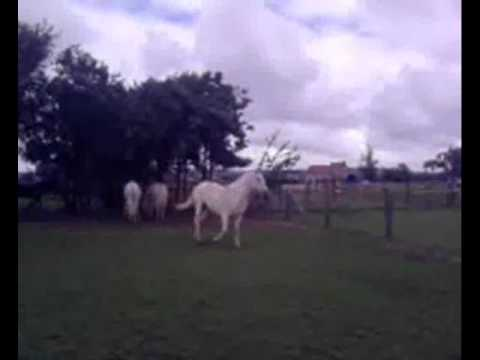 My Horse, Me, My Friends, And My Friends Horses Xxx video