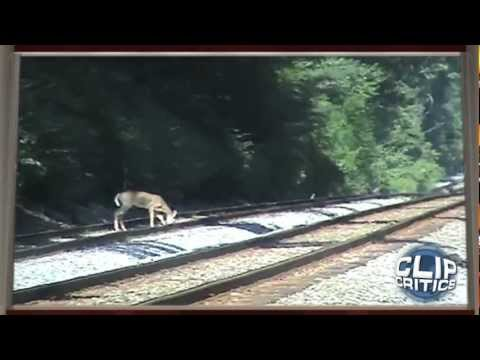Deer Gets Hit by Train
