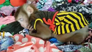 Monkey Baby Nui | Mother is making clothes for Nui, Nui is sleeping on her clothes