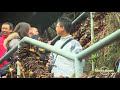 Zhangjiajie National Forest Park - China - Lonely Planet travel video