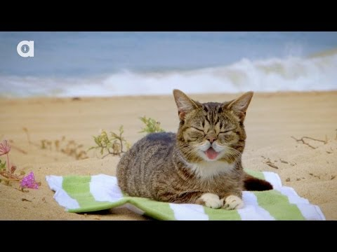 Lil BUB's Magical Summertime Yule LOG Video