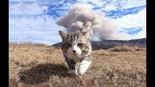 The World's Most Photogenic Cat
