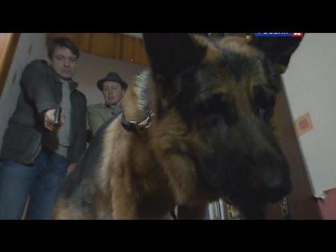 Лорд. Пёс-полицейский: сезон 1, серия 23