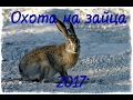 Охота на зайца 2017. The hunting of the hare
