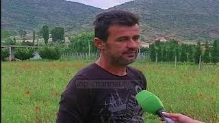 Fermerët e Korçës zgjedhin bimët medicinale - Top Channel Albania - News - Lajme