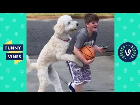 TRY NOT TO LAUGH - Funniest Pets of the Week!