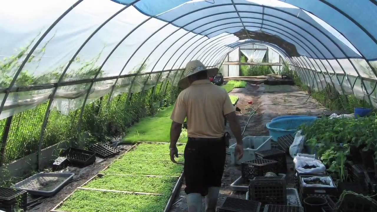 Building a greenhouse youtube for How to make house green