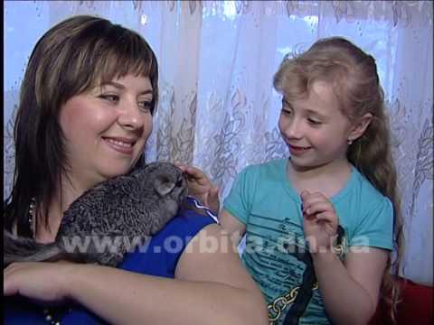 Шиншилла - друг детей