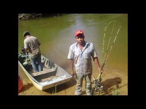 pescaria de trairão no rio paracatu turma guarda mor mg