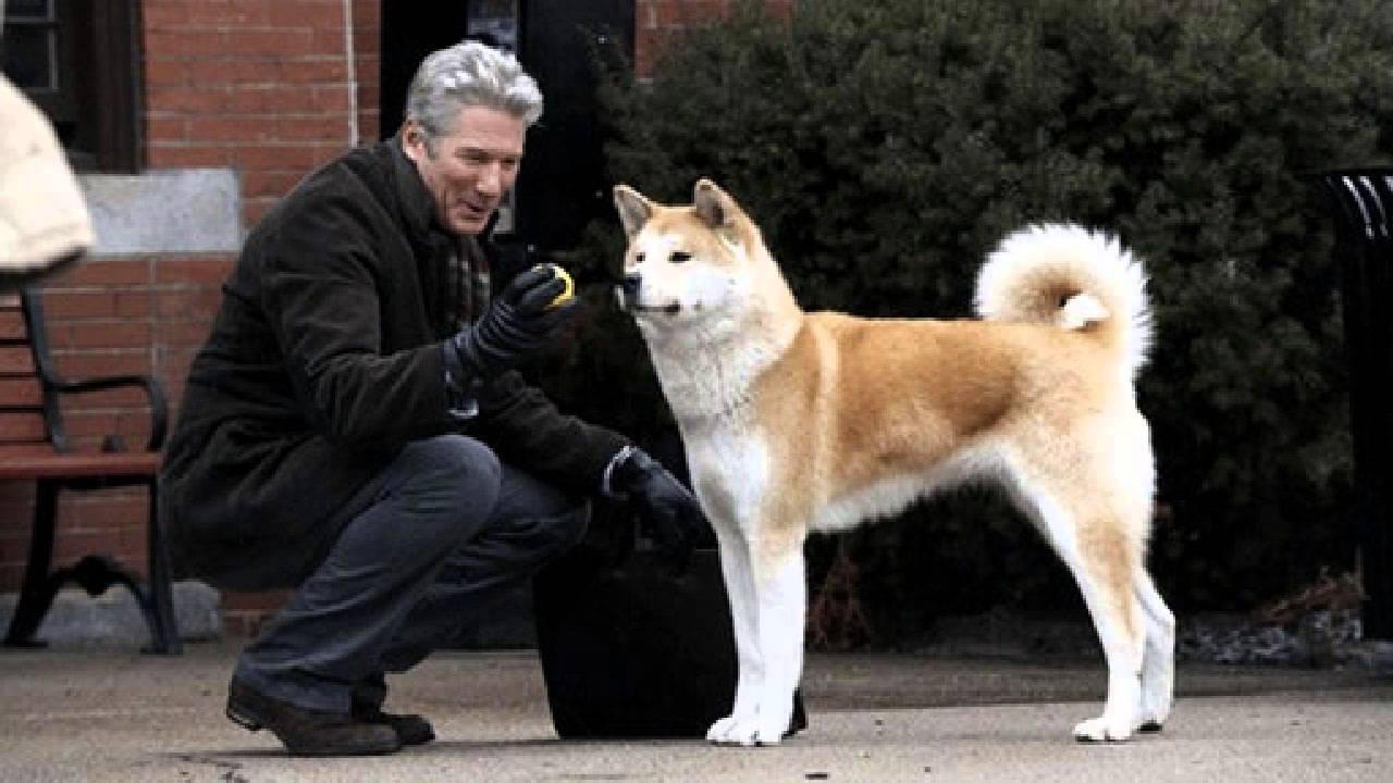 Hachiko dog