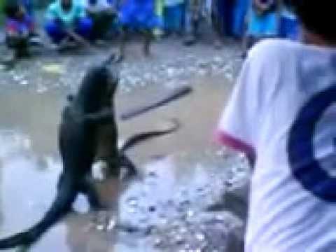 Kejadian Aneh Selepas Banjir!! video