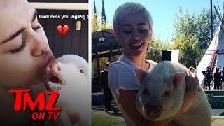 Miley Cyrus' Pet Pig Bubba Sue Dies | TMZ TV
